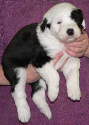 Puppies Trooper Dottie mimi